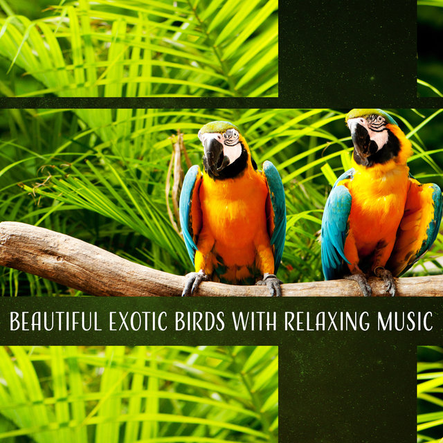 Beautiful Exotic Birds with Relaxing Music - Deep in the Jungle, Tropical Sounds for Meditation, Sleep