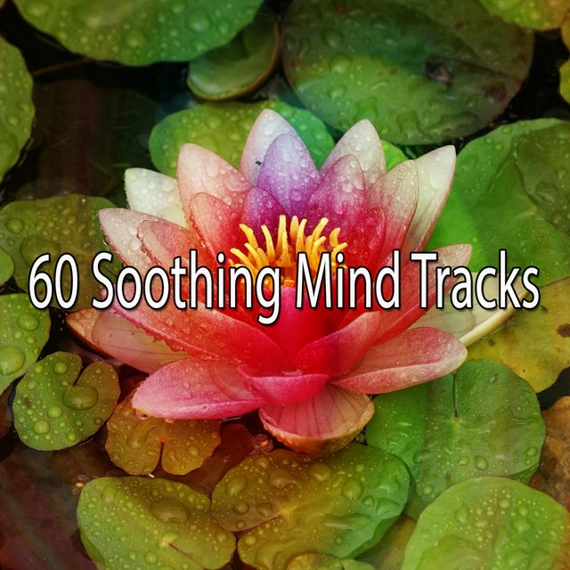 60 Soothing Mind Tracks