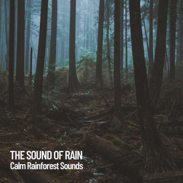 The Sound of Rain: Calm Rainforest Sounds