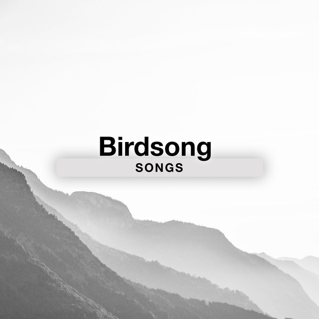 Background Natural Birdsong Songs