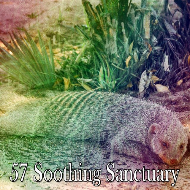 57 Soothing Sanctuary