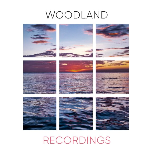 Background Tranquil Woodland Recordings