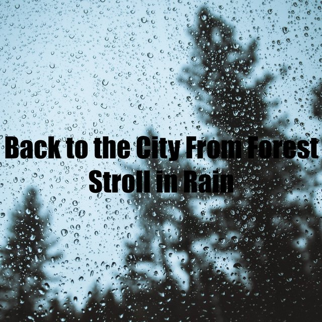 Back to the City From Forest Stroll in Rain