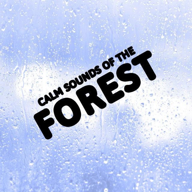 Calm Sounds of the Forest