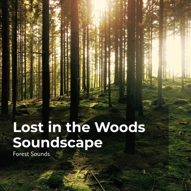 Lost in the Woods Soundscape