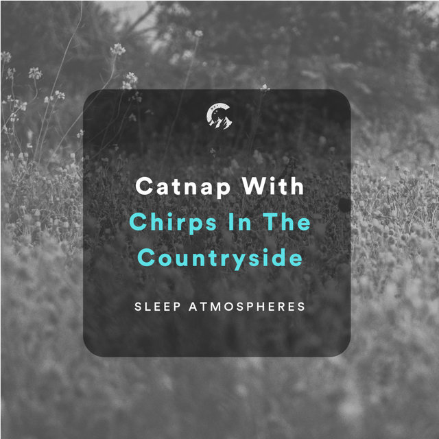 Catnap With Chirps In The Countryside
