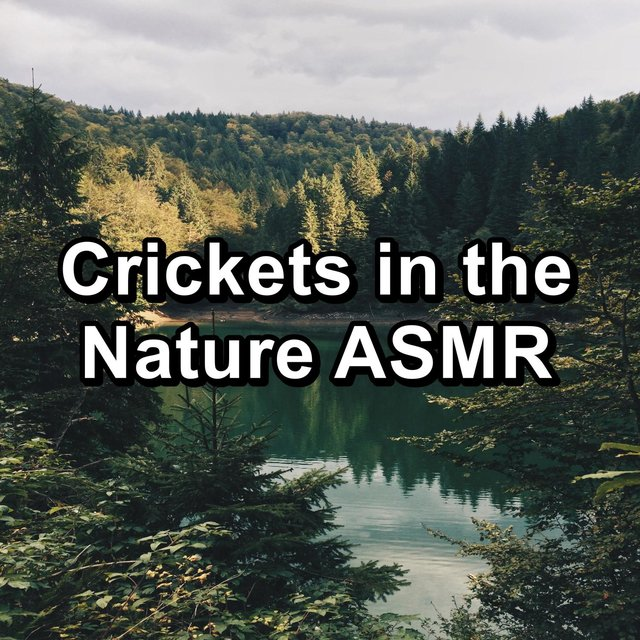 Crickets in the Nature ASMR