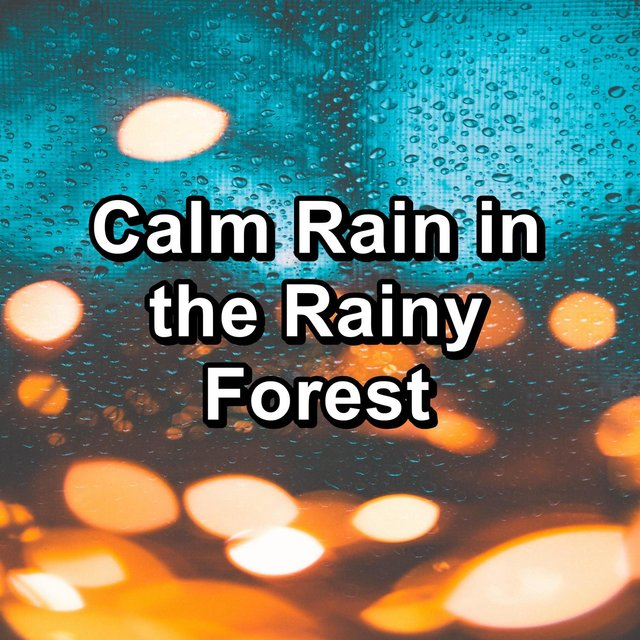 Calm Rain in the Rainy Forest