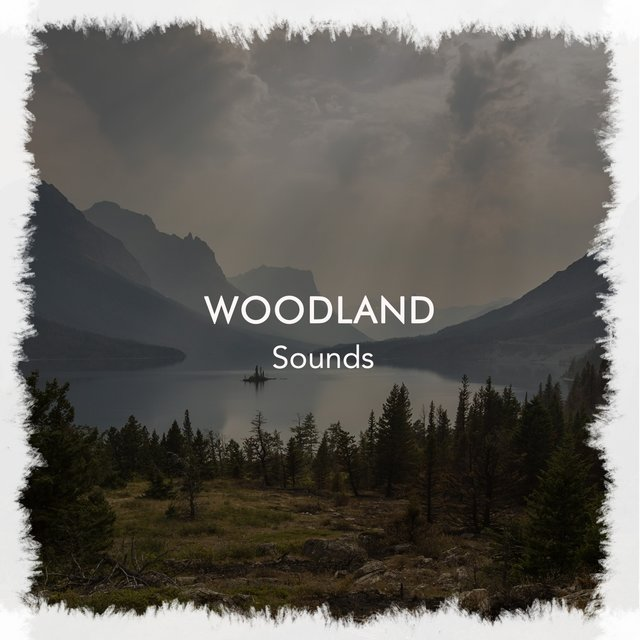 Peaceful International Woodland Sounds