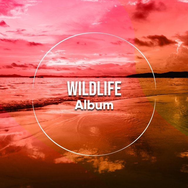 Looping International Wildlife Album