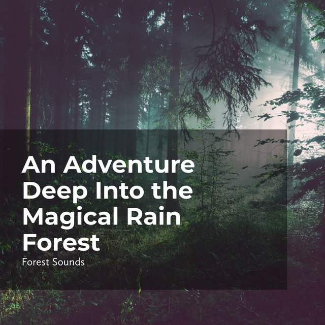 An Adventure Deep Into the Magical Rain Forest