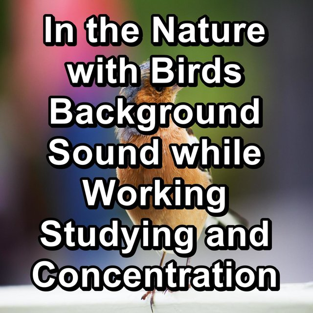 In the Nature with Birds Background Sound while Working Studying and Concentration