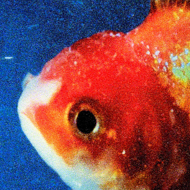 Cover art for album  by Vince Staples