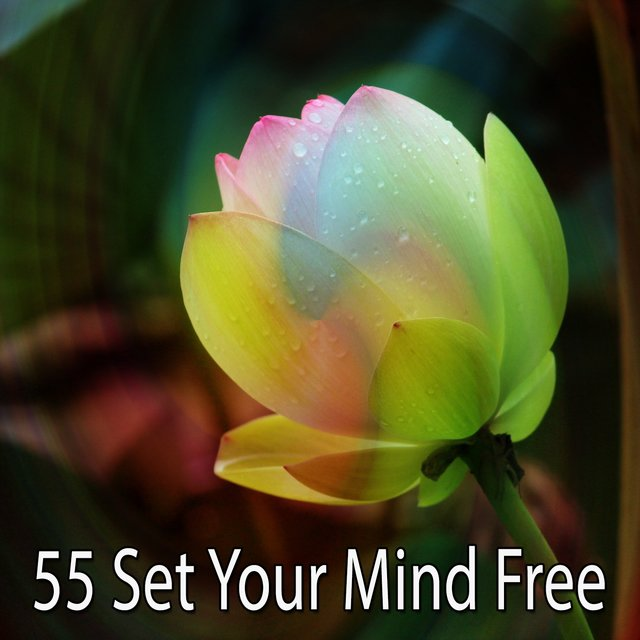 55 Set Your Mind Free