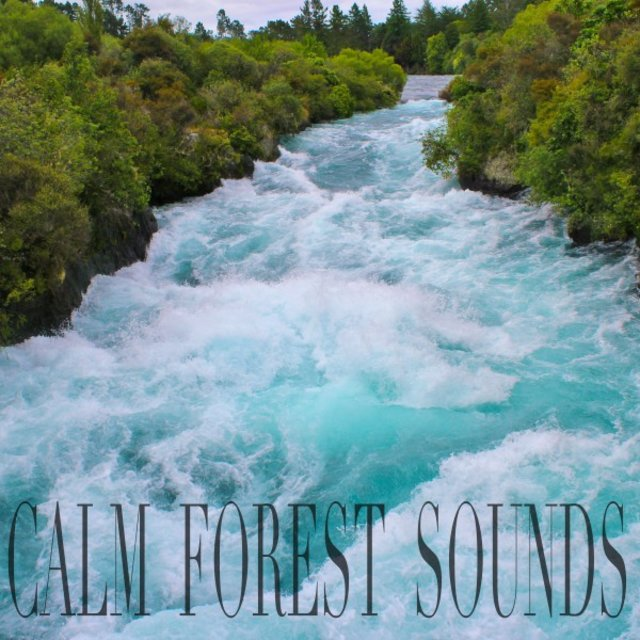 Calm Forest Sounds