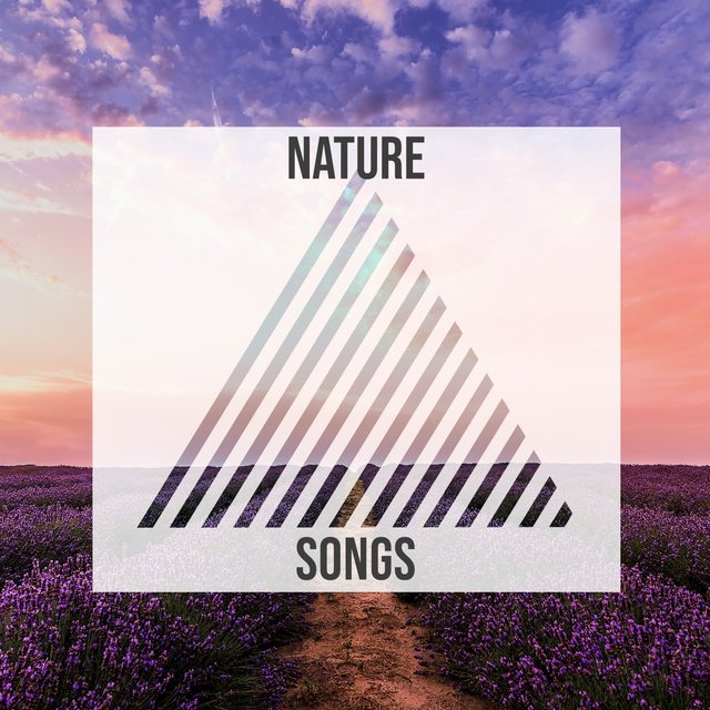Mellow Tranquil Nature Songs