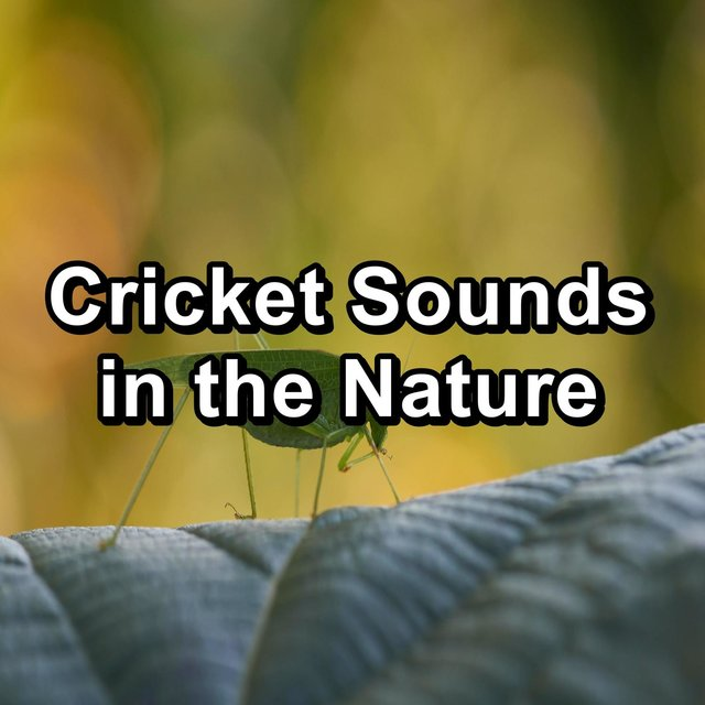 Cricket Sounds in the Nature
