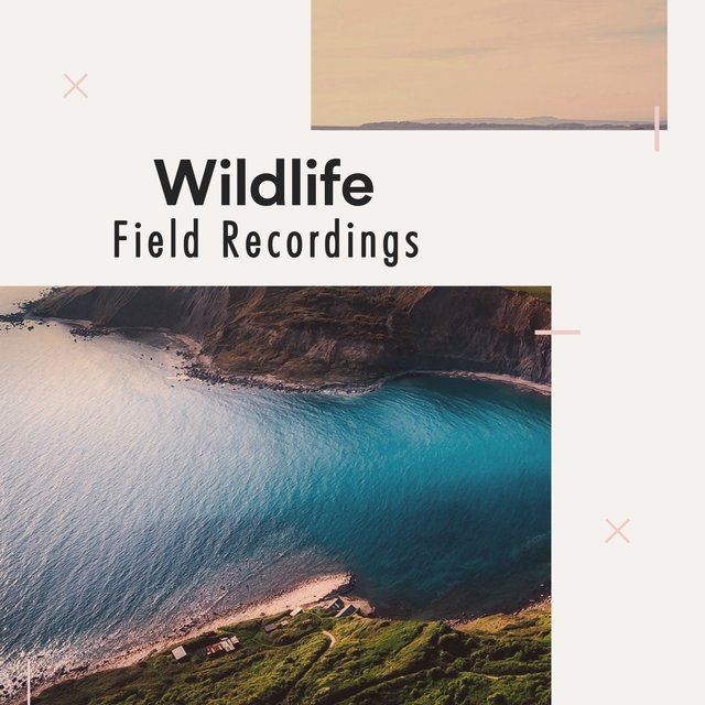 Calm Tranquil Wildlife Field Recordings
