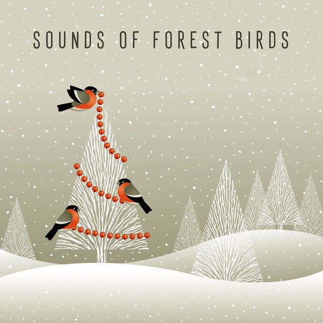 Sounds of Forest Birds – Natural and Ecological Melodies with Gentle Piano Sounds