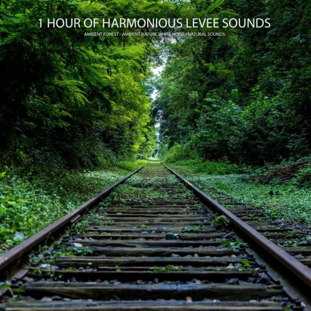 1 Hour of Harmonious Levee Sounds