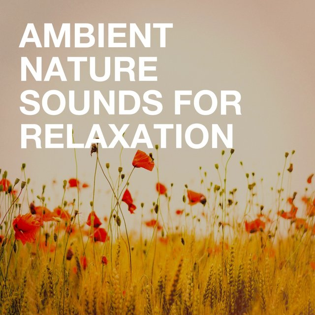 Ambient Nature Sounds for Relaxation