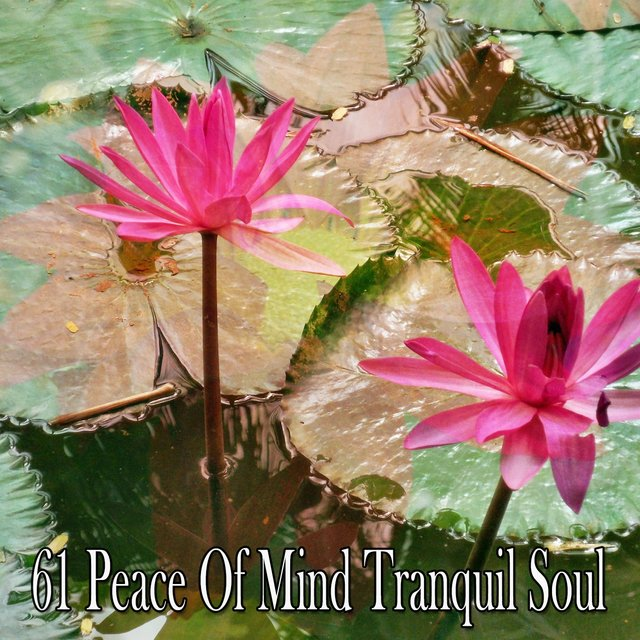 61 Peace of Mind Tranquil Soul