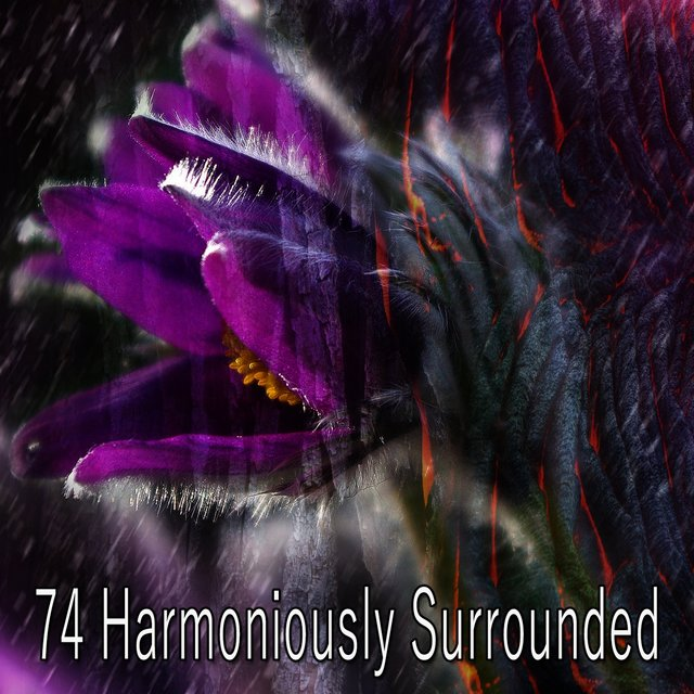 74 Harmoniously Surrounded