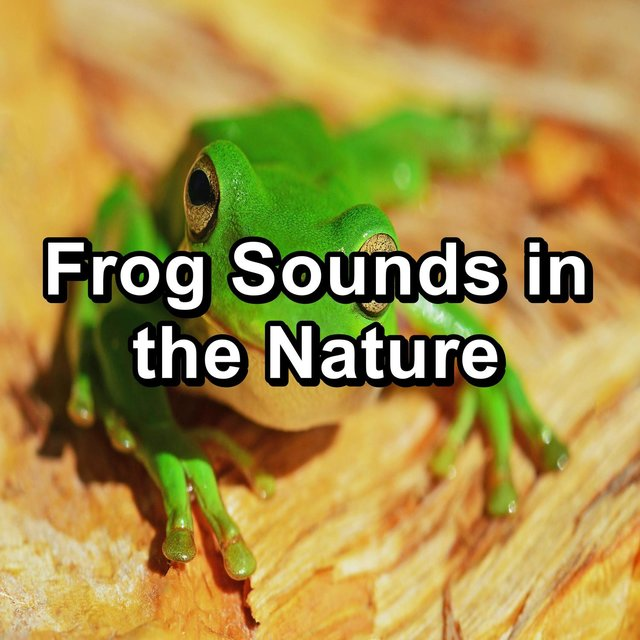 Frog Sounds in the Nature