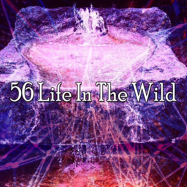56 Life in the Wild