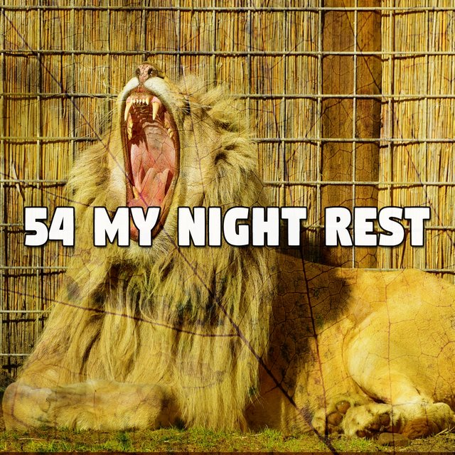 54 My Night Rest