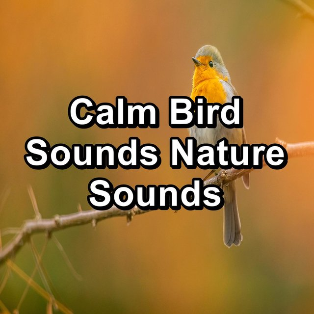 Calm Bird Sounds Nature Sounds