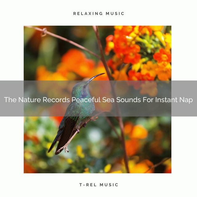 The Nature Records Peaceful Sea Sounds For Instant Nap
