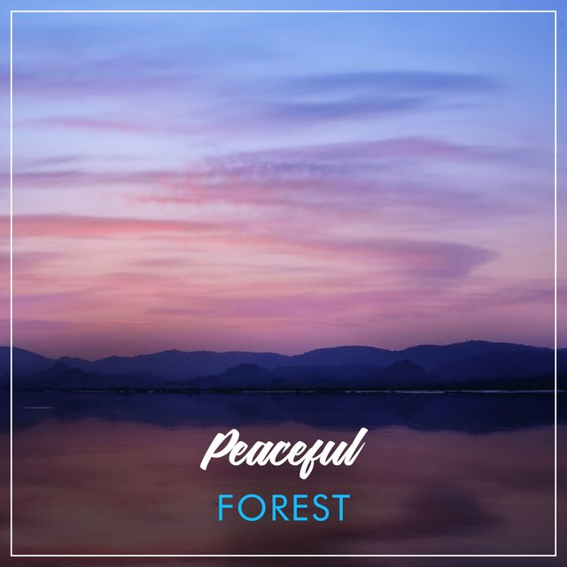 Peaceful Tranquil Forest Music
