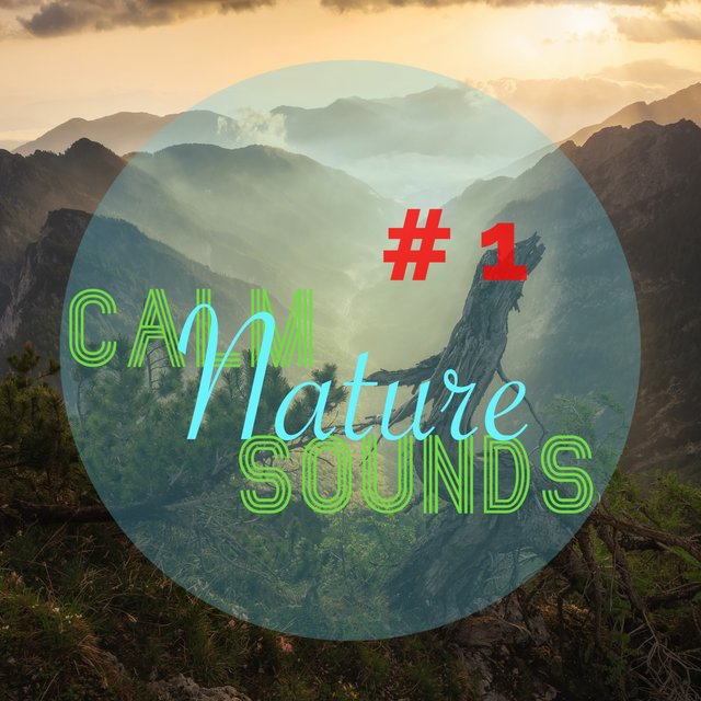 # 1 Calm Nature Sounds