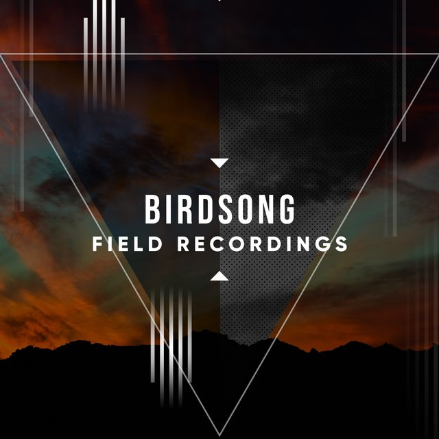 Peaceful International Birdsong Field Recordings