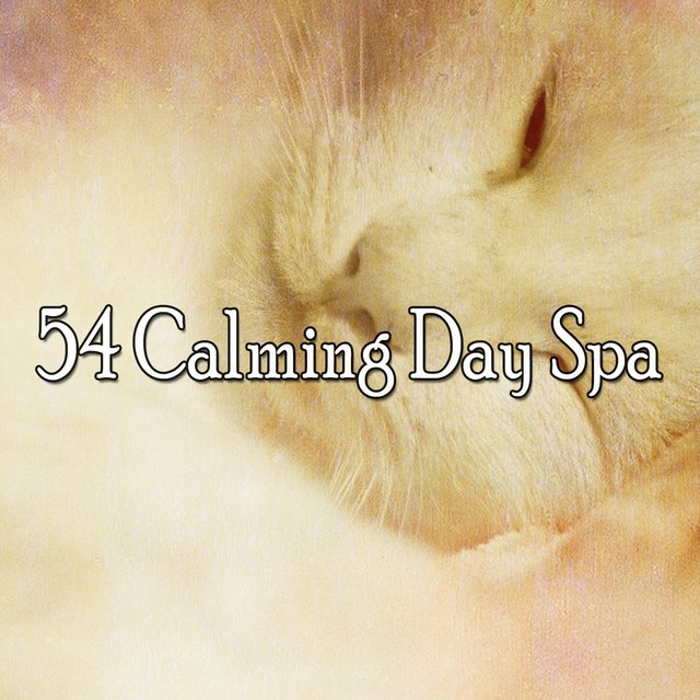 54 Calming Day Spa
