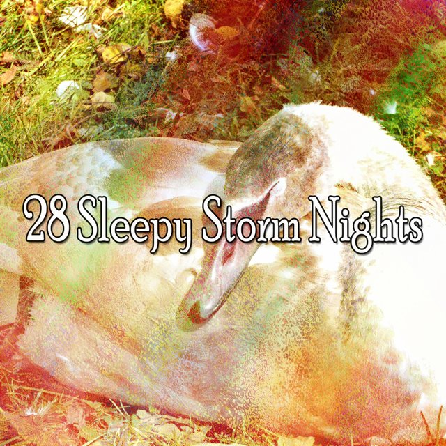 28 Sleepy Storm Nights