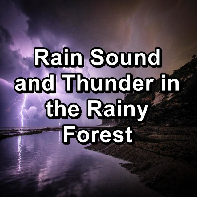 Rain Sound and Thunder in the Rainy Forest