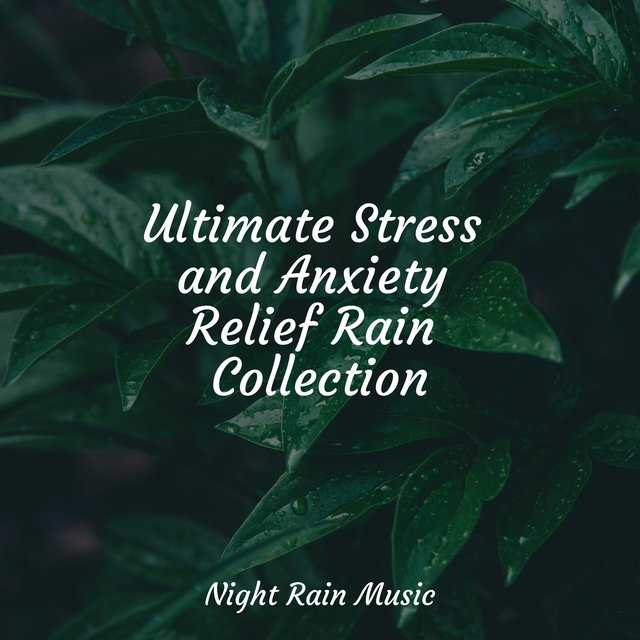 Ultimate Stress and Anxiety Relief Rain Collection