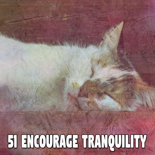 51 Encourage Tranquility
