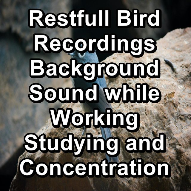 Restfull Bird Recordings Background Sound while Working Studying and Concentration