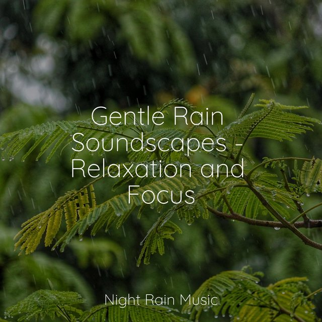 Gentle Rain Soundscapes - Relaxation and Focus