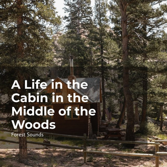A Life in the Cabin in the Middle of the Woods