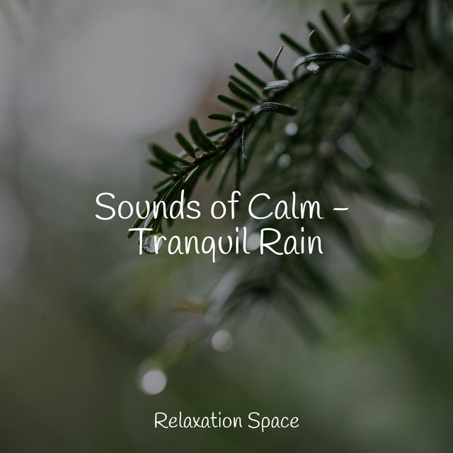 Sounds of Calm - Tranquil Rain