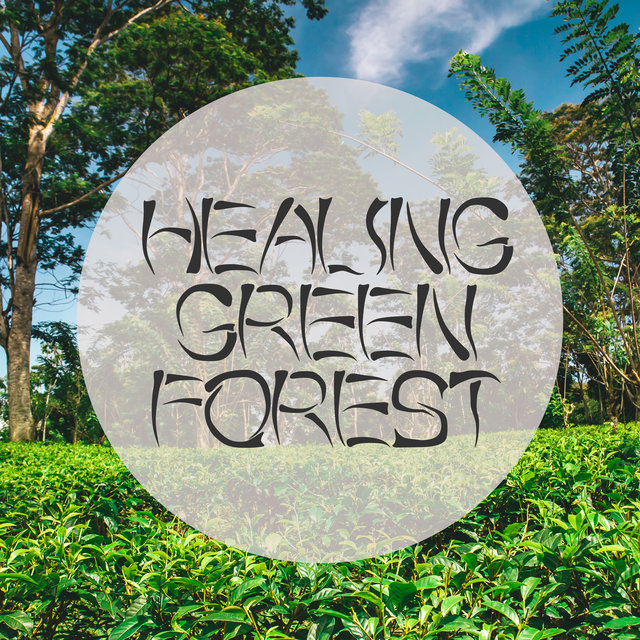Healing Green Forest - 15 Nature Soundscapes for Blissful and Deep Meditation