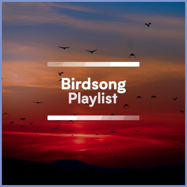 Quiet Native Birdsong Playlist