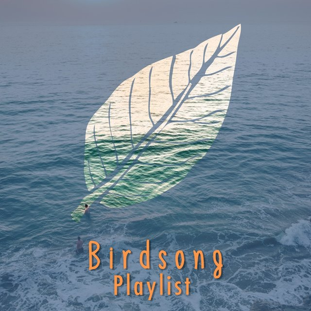2020 Reflective Rustic Birdsong Playlist