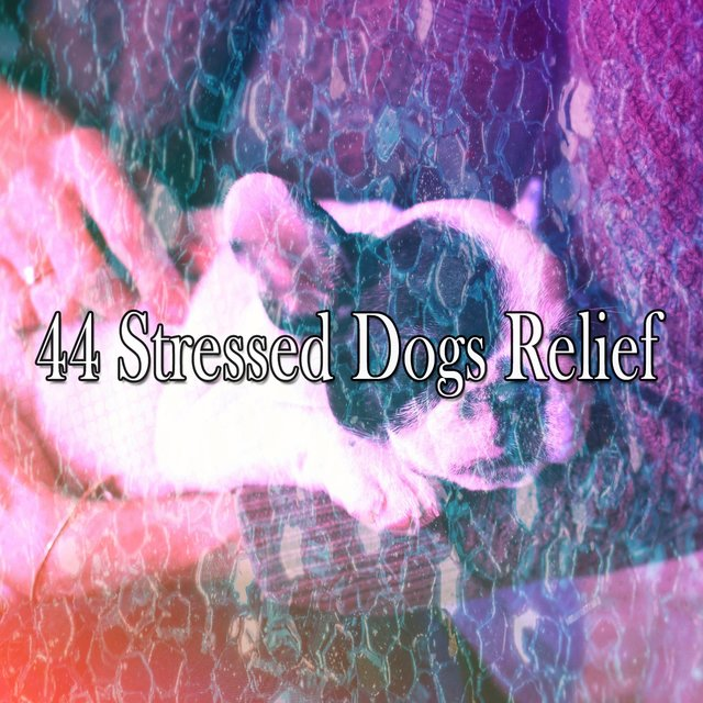 44 Stressed Dogs Relief