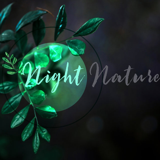 Night Nature: Calm Oceanic Waves, Sounds of Forest Animals, Singing Birds, Sleep Music and Much More