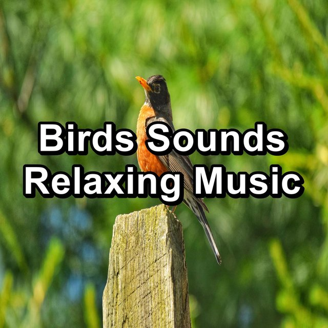 Birds Sounds Relaxing Music